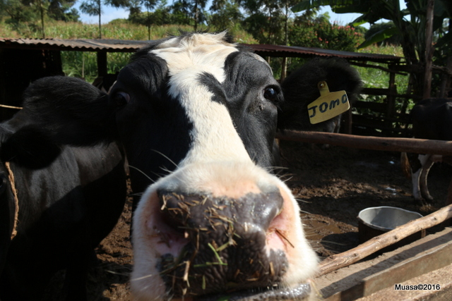 Biogas -  the power of manure
